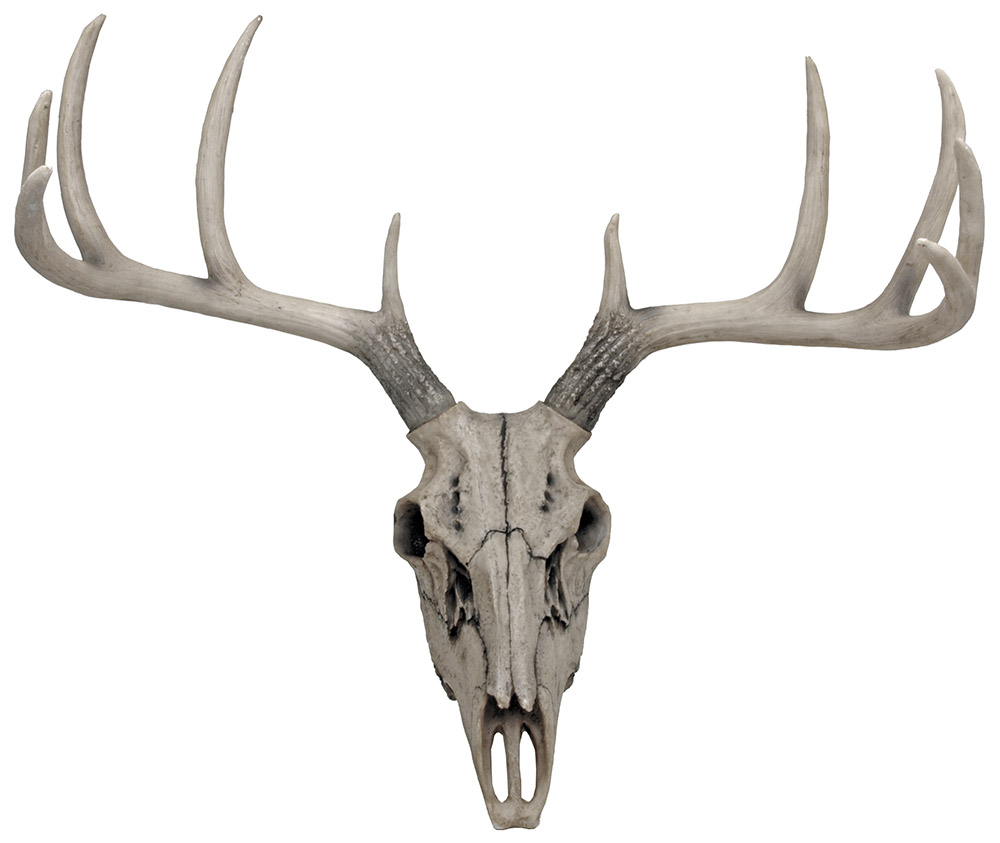 Weathered Glory Deer Skull