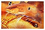 Guy Harvey Redfish Welcome Door Mat