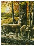 "16"" x 12"" LED Canvas Wall Art - Autumn Whitetails"
